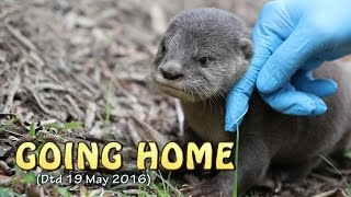 Download Re-introduction of pup back to its family after 1-week (Dtd 19 May 2016) Video