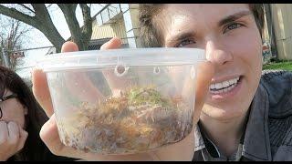 Download Reptile Expo & Petsmart Dumpster Diving *I Got Another Pet!* Video
