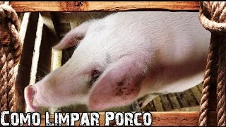 Download Como Limpar Porco - Preparo Completo Video