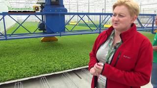 Download Technologia produkcji warzyw polowych Video