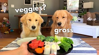 Download Dog Reviews Food With Girlfriend | Tucker Taste Test 12 Video
