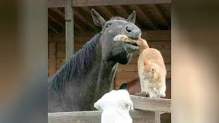 Download Most UNBELIEVABLE and FUNNY ANIMAL MOMENTS caught on cam 2019 Video