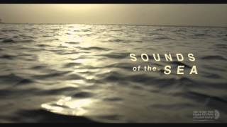 Download Sounds of the Sea - Trailer Video