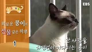 Download 고양이를 부탁해 - 총체적 냥국, 콩이네 이야기 #001 Video