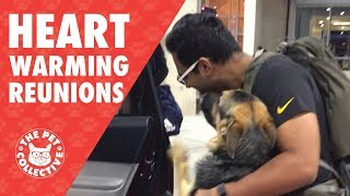 Download Try Not To Cry | Dogs Reuniting With Their Owners Video