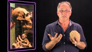 Download Free Becoming Human: Anthropology Course - Overview - Open2Study Video