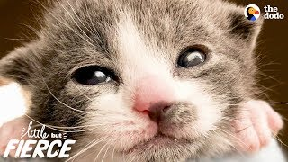 Download Tiniest, Cutest Animals Have The Biggest Hearts | The Dodo Little But Fierce Video