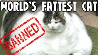 Download 10 Banned World Records Video