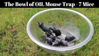 Download A Bowl Of Peanut Oil Catches 7 Mice In 1 Night - Motion Camera Footage Video