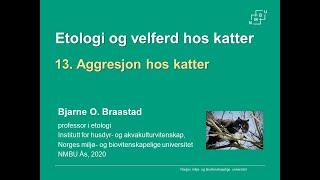 Download Aggresjon hos katter Video