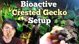 Download How To Setup a Bioactive Enclosure for a Crested Gecko! Video