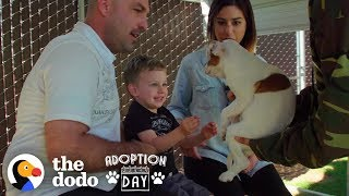 Download This Pittie Was Pregnant In A Shelter When She Found The Best Family | The Dodo Adoption Day Video