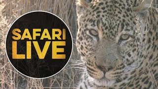 Download safariLIVE - Sunrise Safari - July 7, 2018 Video