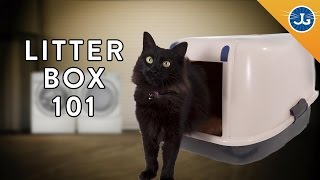 Download You're Setting Up Your Litter Box All Wrong! Video