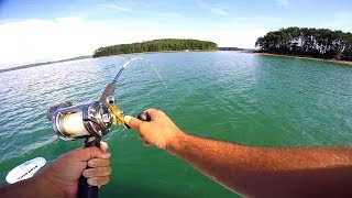 Download Catching THREE Fish at ONE Time!!! Video