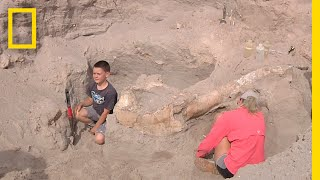 Download Boy Trips While Hiking, Discovers Million-Year-Old Fossil   National Geographic Video