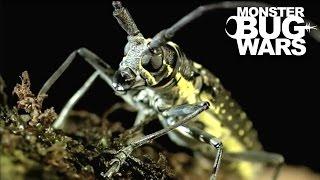 Download Longicorn Beetle vs Flame Bellied Orb Weaver | MONSTER BUG WARS Video