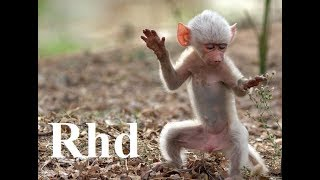 Download Baboons, Peaceful Primates - Nature 2018 HD Documentary. Video