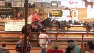 Download Horse Plus Humane Society Saves ″Big Lick″ Throw Away ″Skywatch Magical Dream″ From Slaughter Video