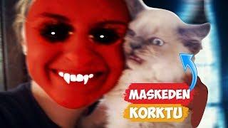 Download Maskeden Korkan Kediler! | [2018 Derleme] ● Eğlenceli Anlar Video