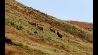 Download Stalking Red Stags - A Season in 15 Minutes Video