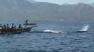 Download The Whale Hunters from Lamalera - Part 1 / Velrybáři z Lamalery - Část 1 Video