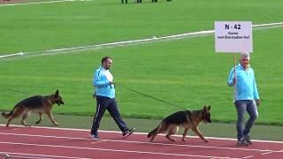 Download 2017 SV BSZS in Ulm NKGR part 23 N-42 Goran vom Beirstadter Hof Video