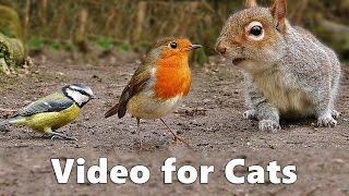 Download Video for Cats to Watch : Squirrels and Birds Extravaganza Video