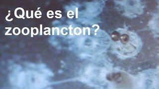 Download ¿Qué es el zooplancton? Video
