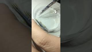 Download Zebrafish fin amputation Video
