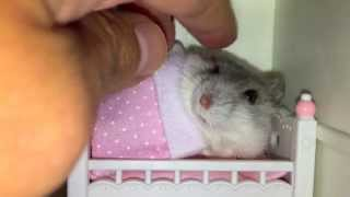 Download Tucking my hamster in her tiny bed but she'll only sleep after getting a massage! Video