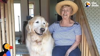 Download Senior Dog Always Visits His Favorite Neighbor - CHEDDAR | The Dodo Video