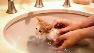 Download First bath for foster kittens Video