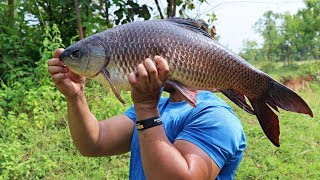 Download THUNDER MADE BIG WHOLE GOAN FISH CURRY | THE BEST AND DELICIOUS INDIAN FISH CURRY | SUPER FISH BOWL Video