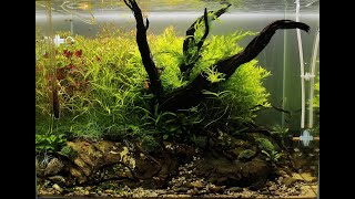 Download Snake Wood Aquascape - ADA Tank - ″Wriggle Roots″ - Step by Step Tutorial + Maintenance Video