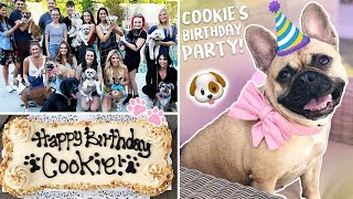 Download My Dog's EPIC Birthday Party!!!! Video