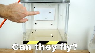 Download Can Flies Actually Fly in a Vacuum Chamber? Video