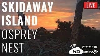 Download Skidaway Osprey Nest - Savannah, GA Video