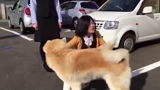 Download 秋田犬パティ 税理士事務所のスタッフの方と1年振りの再会(*^o^*) Video
