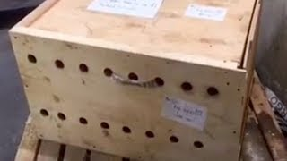 Download Unmarked Wooden Box Stood At Airport For 7 Days: When Opened The Terrible Was Revealed Video