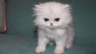 Download OUR NEW KITTEN CLOUD!!! Video