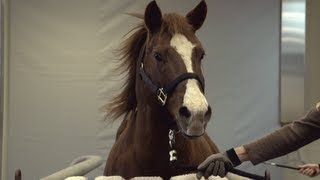 Download Equine Hospital - Veterinary Medicine Video