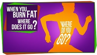 Download When You Burn Fat, Where Does it Go? Video