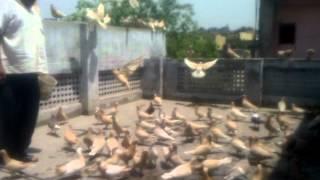 Download USTAD SHADI LAL PAHALWAN Video