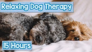 Download NEW, IMPROVED Relaxing Music for Dogs! Calm Your Energetic Dog with this Soothing Music (2018) 🐕💤 Video