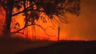 Download Animals struggle to escape the flames as fires rage Video