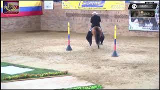 Download Campeón Reservado Navideño de la Ceiba Trocha y Galope, Villeta Grado B Video
