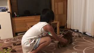 Download 子供とめちゃくちゃ楽しそうに遊ぶ猫2018 Video