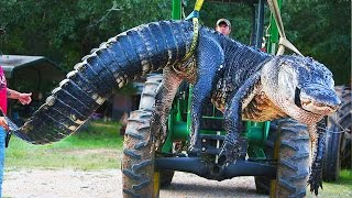 Download 10 Scary Reptiles Caught Video