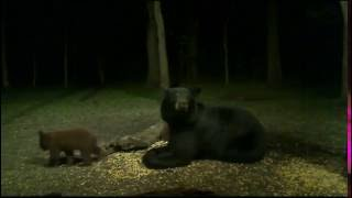 Download June bear visit Video